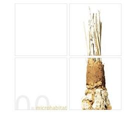 microhabitat #