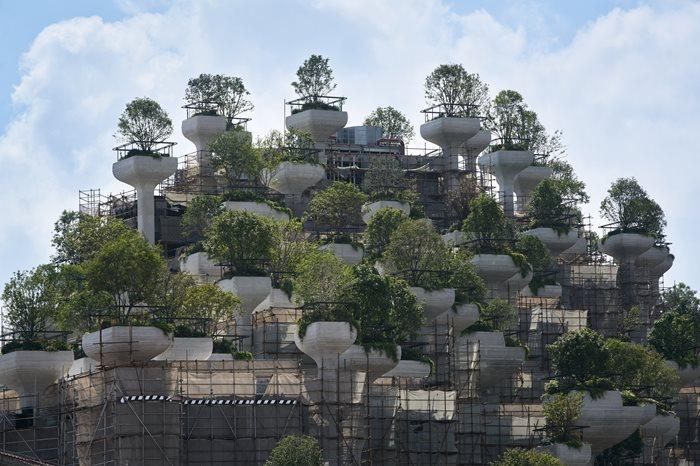 1000 Trees